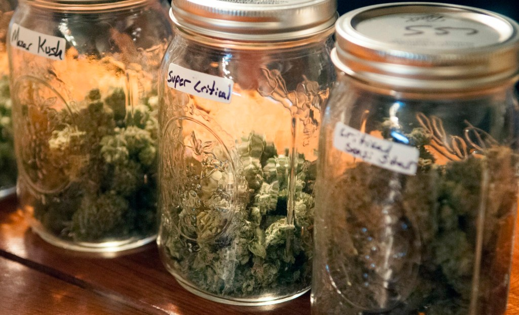 As more than a dozen states from Hawaii to New Hampshire consider legalizing marijuana, doctors warn of an urgent need for better education.
