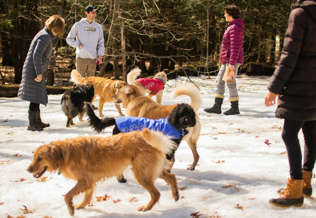 Dog owners and their canine companions commune on March 31 in Portland's Baxter Woods. Dogs are now allowed to be off leash in the park, but won't be if a city ban being considered is passed.