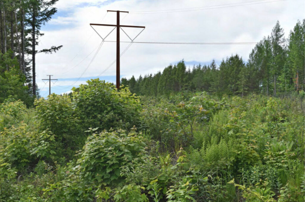 This photo simulation shows the view northwest from Wilson Hill Road in West Forks toward the proposed CMP transmission line.