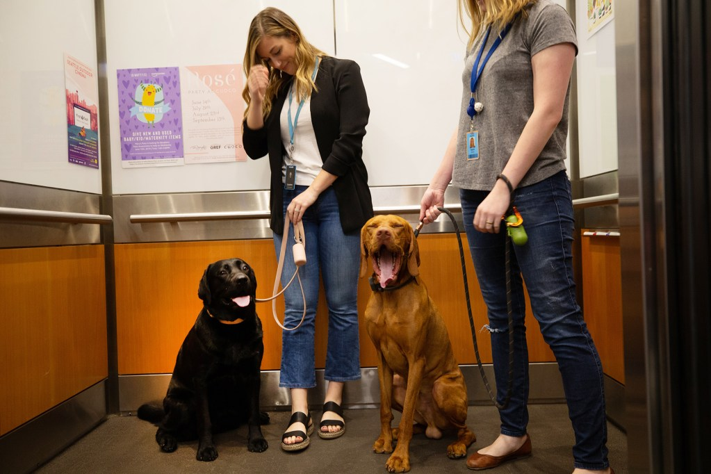 Lauren Lee, left, and Agata Skora with their dogs, Emmy and Manu, head up the elevator for a day of work with their owners at Amazon in Seattle on June 11. As lines blur between work and home, and people and pets bond in new ways, companies nationwide are finding that dog-friendly perks are relatively cheap compared with health plans and other conventional benefits.