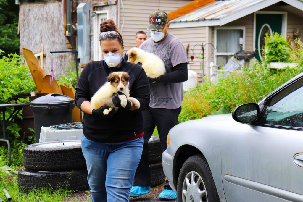 Dogs are removed from a property July 23 in Solon after state officials executed a search warrant and seized 107 animals.