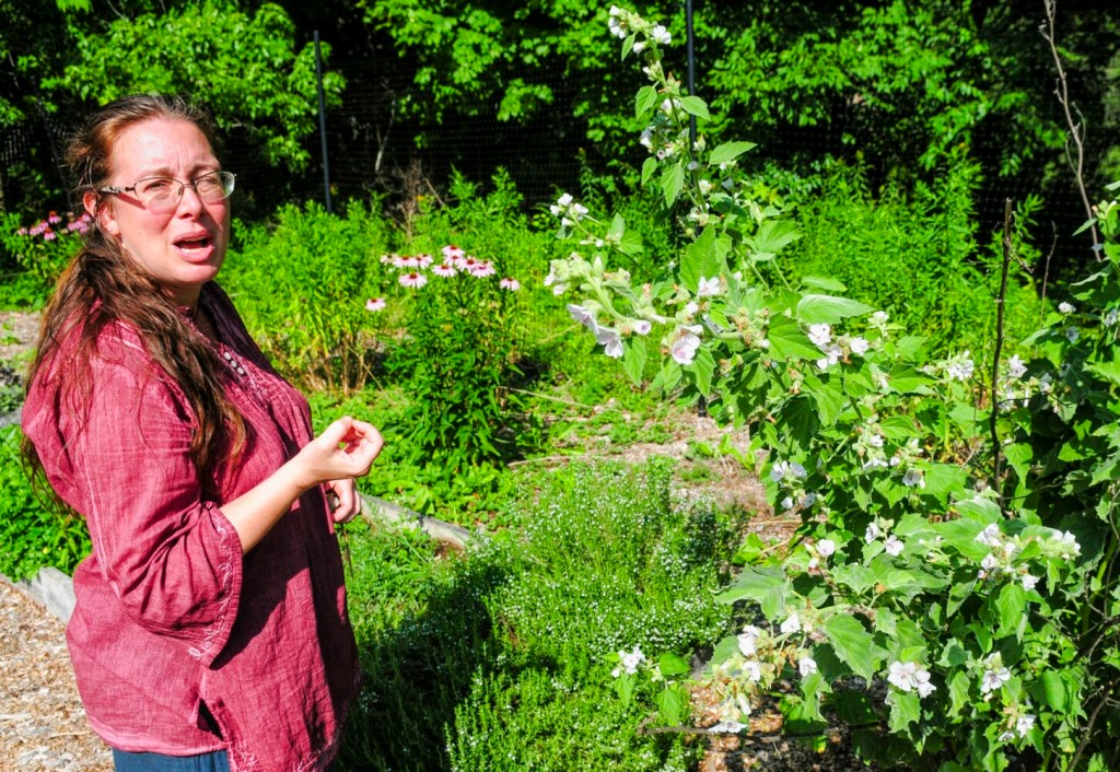 Jessica Gorton talks about marshmallow flowers, at right, in her garden on Friday at Mother Jess Herbals in Readfield.