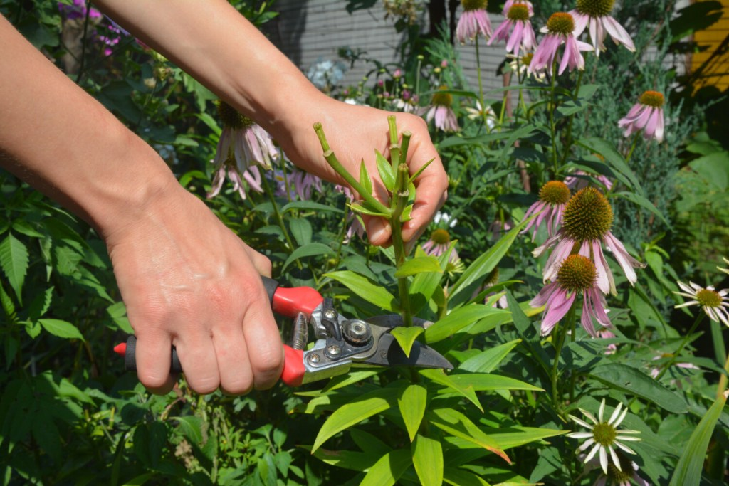 When fall comes, Maine Gardener Tom Atwell no longer deadheads flowers or prunes. He lets flowers go to seed to feed hungry birds and invite volunteers into the garden the following year.