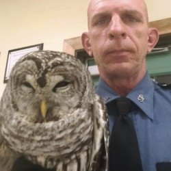 Trooper_Rescues_Owl_80908
