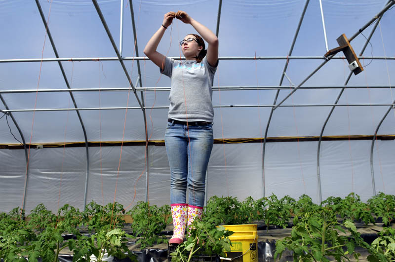 Samantha Lee, 15, of Winthrop, hangs strings inside a greenhouse Monday at the Stevenson Farm in Wayne. Lee was erecting a route for tomato plants to climb this season during her spring break from high school.