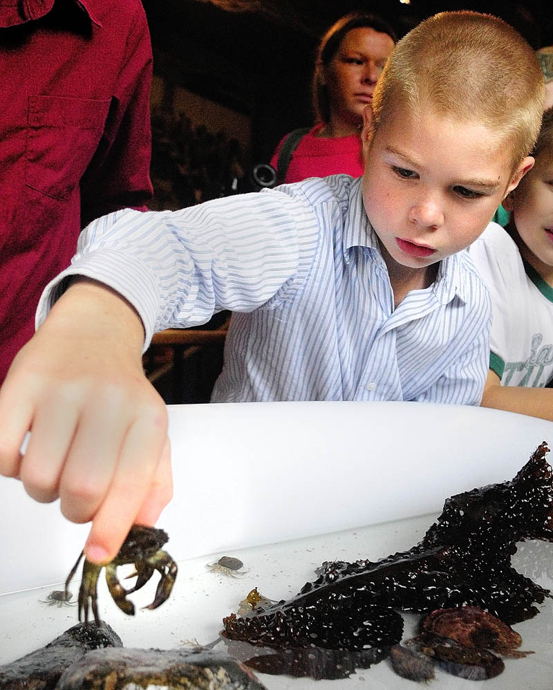 Bryce Carey picks up a crab from the Coast Encounters touch tank during Earth Science Day on Wednesday at Maine State Museum in Augusta.