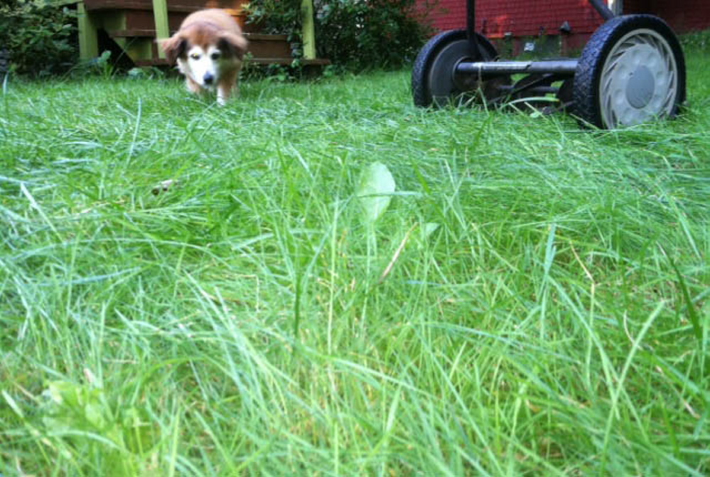 A natural, pollution-free, low-maintenance and pet-friendly lawn can be the new American norm.