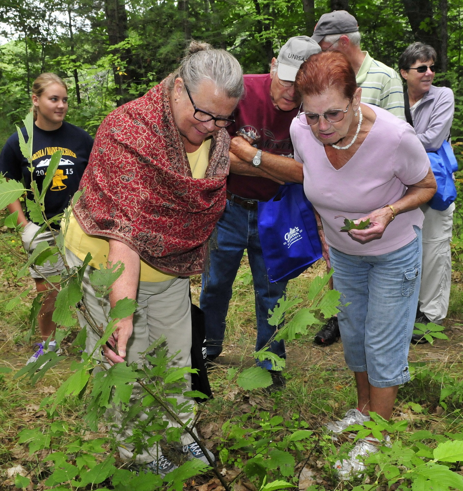 Patrice Drummond, left, and Carla Dillon-Jones look over a small maple tree that they identified during a nature walk through the Pines area in Madison on Sunday. The event was part of the Madison-Anson Days celebration.