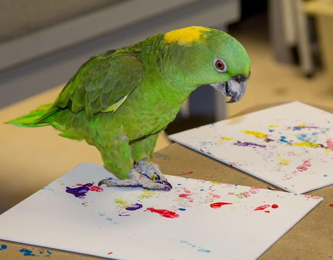 Brock, a yellow-naped Amazon parrot, participates in the fundraiser.