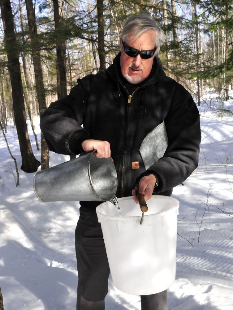 Iver Lofving collects maple sap Monday from trees behind the Chez Lonndorf sap house on Burrill Hill Road in Skowhegan in preparation for the Maine Maple Sunday event this weekend.