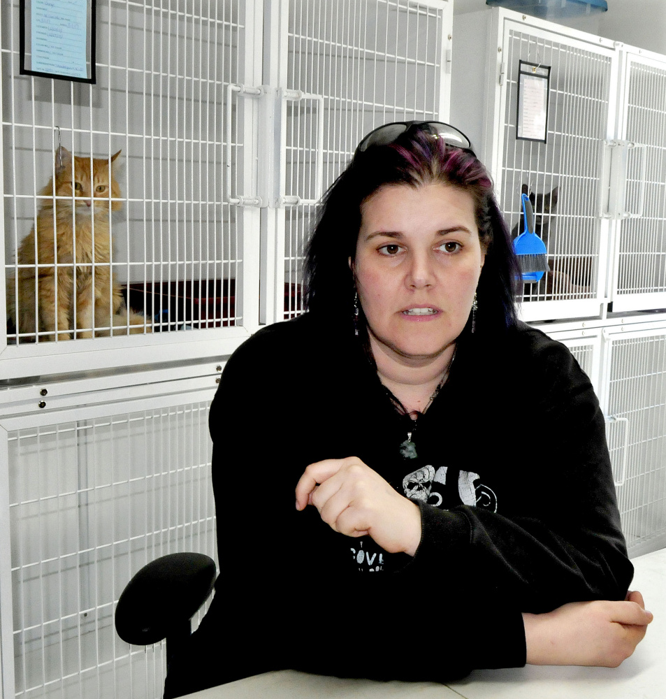 "As two cats watch from cages, Bonnie Brooks of the Somerset Humane Society in Skowhegan discusses Thursday the practice of animal ""flipping"" where a person acquires an inexpensive or free dog for the purpose of selling the animal for a profit."
