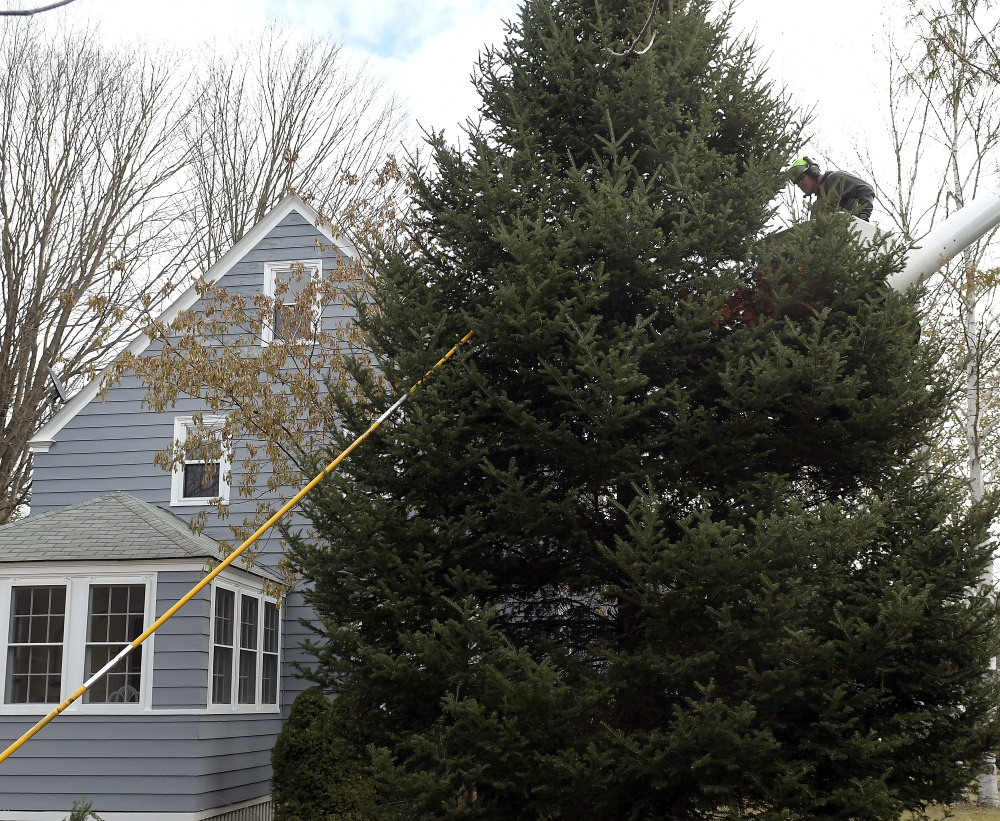 Arborist Cory Constable secures rope Wednesday to a spruce tree on the lawn of Augusta residents Anne and Cliff Vining. Brownies Landscaping and Excavation felled the tree, which the couple donated to serve as a holiday tree on Water Street in Augusta.