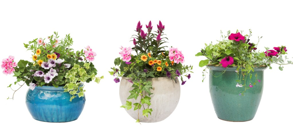 """The """"thriller, filler and spiller"""" principle uses a tall centerpiece surrounded by flowers, with a plant that drapes toward the ground as the """"spiller."""""""