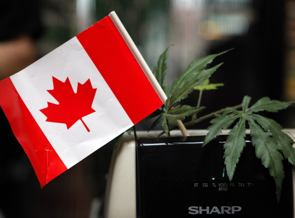 The marijuana leaf won't replace the maple leaf on the Canadian flag, but the pending legalization of pot in Canada does give root to multiple issues.