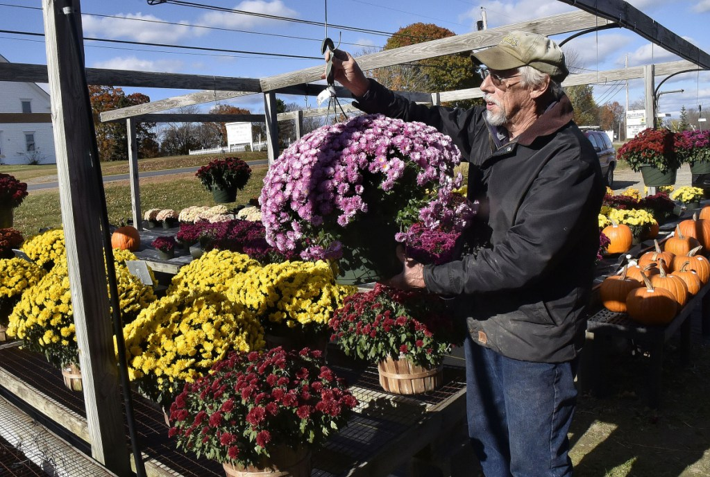Farmer Richard Freeman hangs a mum plant in his retail shop at Hilltop Farm and Greenhouses in Fairfield Center on Monday. Freeman said he is still learning about and in favor of the proposed food sovereignty ordinance the town is considering.