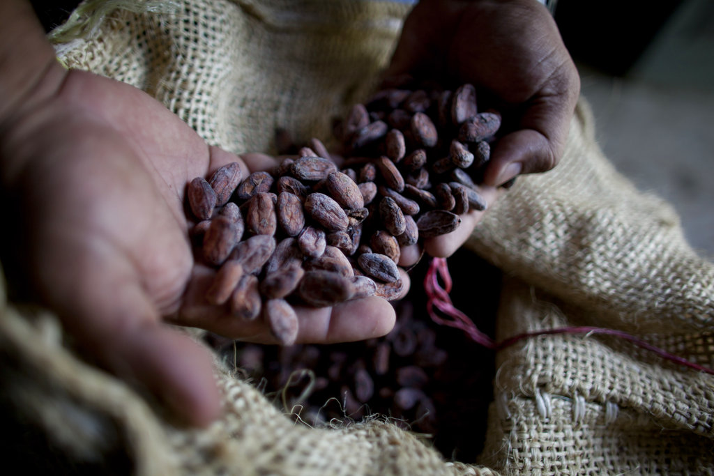 A worker holds dried cacao seeds at a plantation in Cano Rico, Venezuela.