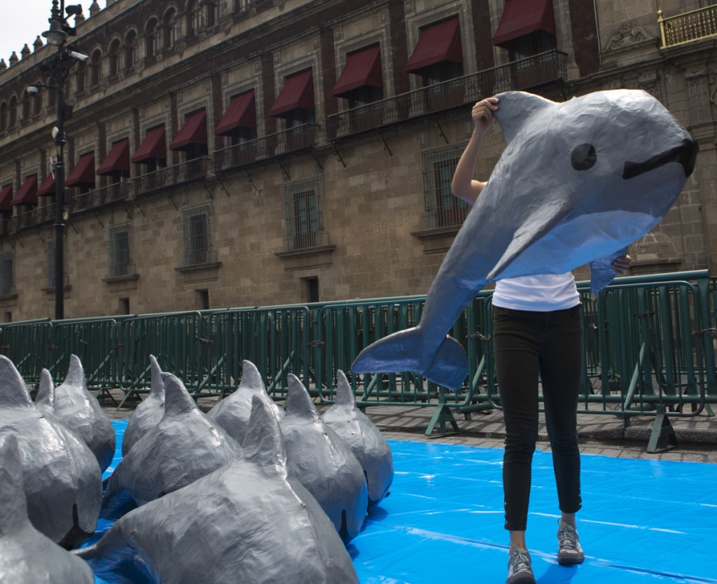A World Wildlife Fund activist carries a paper mache replica of the vaquita marina during an event in front of Mexico's National Palace in July 2017.