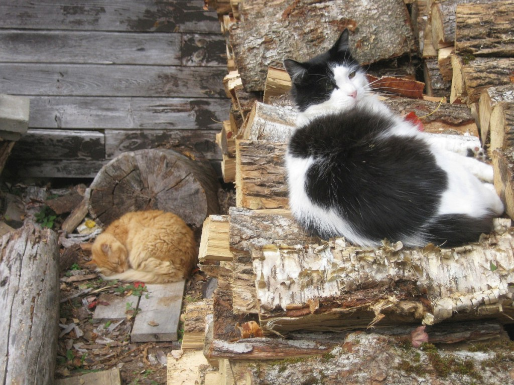 Brian, left, and Panda sleeping in the September sun in Troy. When the birds are gone, where, then, is paradise?