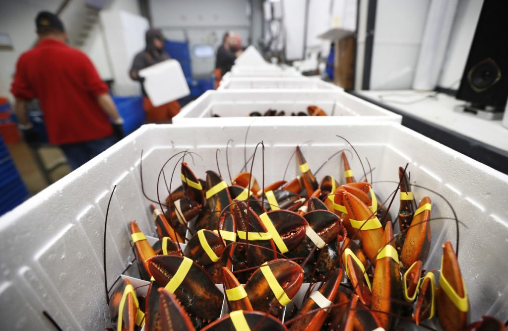 Live lobsters ready for shipment at Lobster Co. in Arundel. Exports of live lobster to China have taken a nearly 50 percent nosedive in the year since tariffs were imposed in the summer of 2018. On Friday, China announced an additional 10 percent tariff, to take effect Sept. 1.