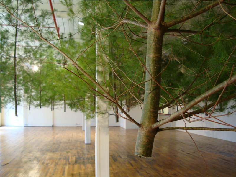 """Now showing at the Coleman Burke Gallery in Brunswick is """"Timbered (pitch),"""" an installation by Jacob Galle."""