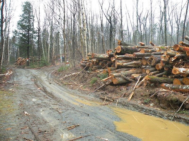 Logging is under way on land in Willimantic owned by Roxanne Quimby, who proposes subdividing the 142-acre parcel into lots.