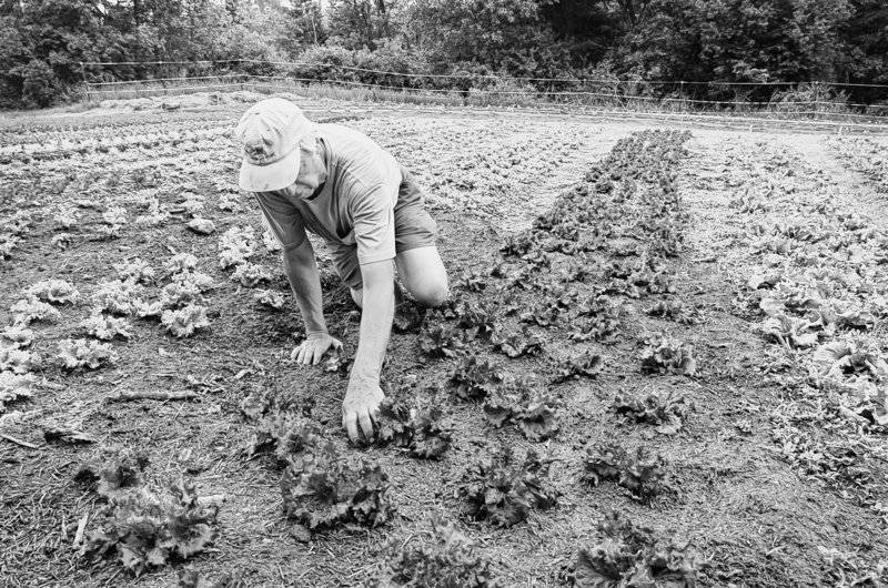 The Department of Agriculture should stand up for the needs of the small farmer.