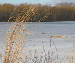 THE REMNANTS of last summer's riverfront grass wave in the wind that skims across the remnants of this winter's ice on the Androscoggin River in Brunswick on Thursday.