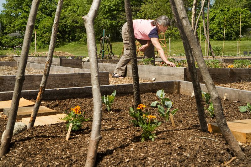 DeAnn Lewis, a Community Garden Collective board member, checks one of the 39 plots in the new South Portland community garden, behind the former Hamlin School. The city's other community garden has a waiting list.