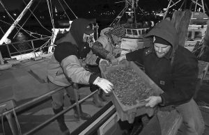 JEFF SANDERS, right, carries a container of freshly caught Gulf of Maine shrimp off a fishing boat on the first day of New England's shrimp fishing season on Wednesday in Portsmouth, N.H. At left is Mike Sanders, who owns a family fish market with his brother Jeff, and at center is fishing boat captain Kurt Lange.