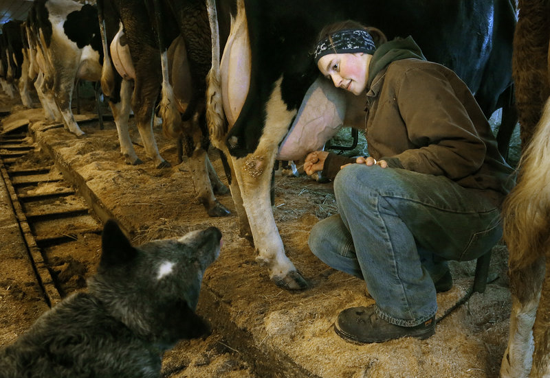 Alison Leary squirts a stream of milk into the mouth of her Australian cattle dog, Pepper, during morning milking chores last month. After the Saco farm closes its dairy operation, she plans to keep a few cows to produce enough milk to make products such as cheese and yogurt.
