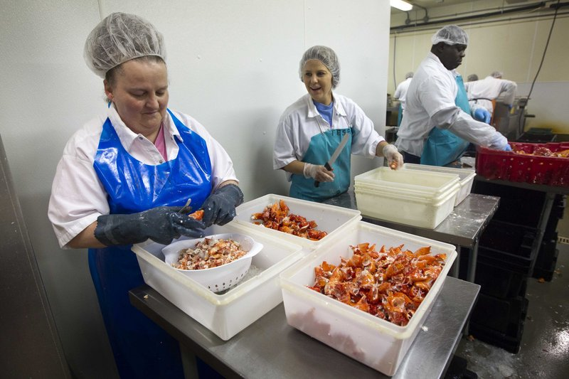 Workers shuck cooked lobster meat at the Sea Hag Lobster Processing plant in Tenants Harbor in 2013.