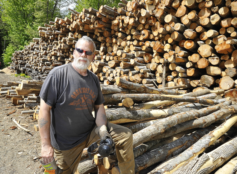 WINDHAM, ME - MAY 21: Mark Killinger, owner of Atlantic Firewood stands by 300-350 cords of hardwood his son, Mike Killinger, owner of Maine Logging, cut for processing this past winter. (Photo by Gordon Chibroski/Staff Photographer)