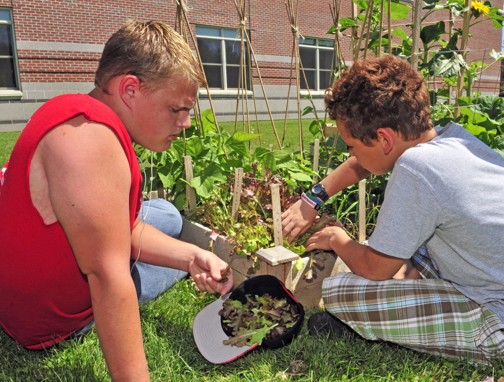 Tyler Hyde, left, and Ethan Overlock pick lettuce Friday with other members of the Augusta Boys & Girls Club at Cony High School.