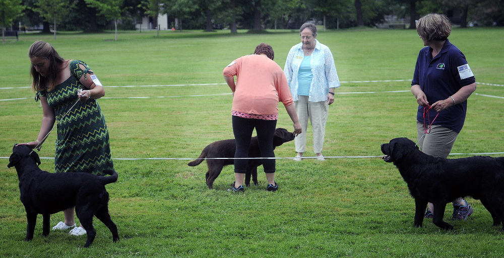 Handlers show Labrador retrievers Sunday during the Acadia Belgian Shepherd Dog Club show at Capitol Park in Augusta.