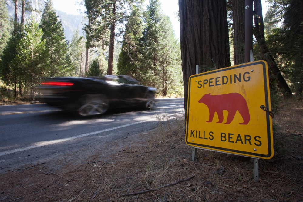 Yosemite National Park has had a huge problem with bears breaking into cars and causing other mayhem and has embarked on an ambitious campaign to train campers in bear awareness. Officials are also training the bears, using GPS collars and other techniques to provide negative reinforcement.