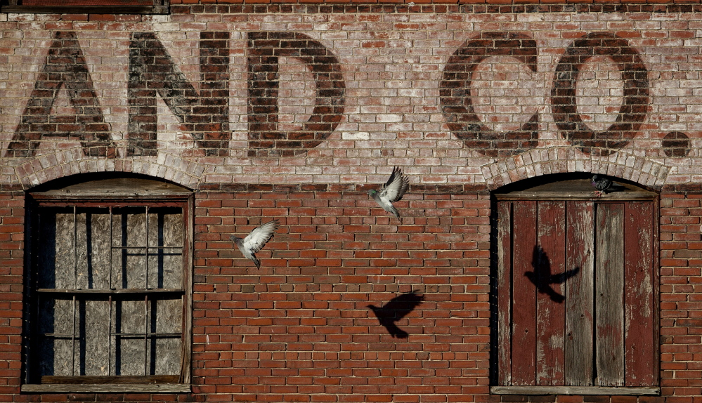 Pigeons fly past the Portland Co. complex on Fore Street on Friday. Some want the site to be declared a historic district.