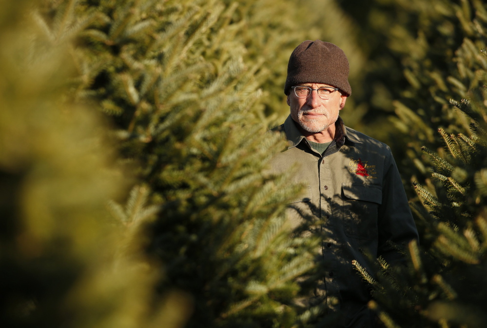 "Jay Cox has been selling Christmas trees at The Old Farm Christmas Place in Cape Elizabeth for five years. ""If you cut the tree, take it home and get it in water right away, it's going to last a long time,"" he said."
