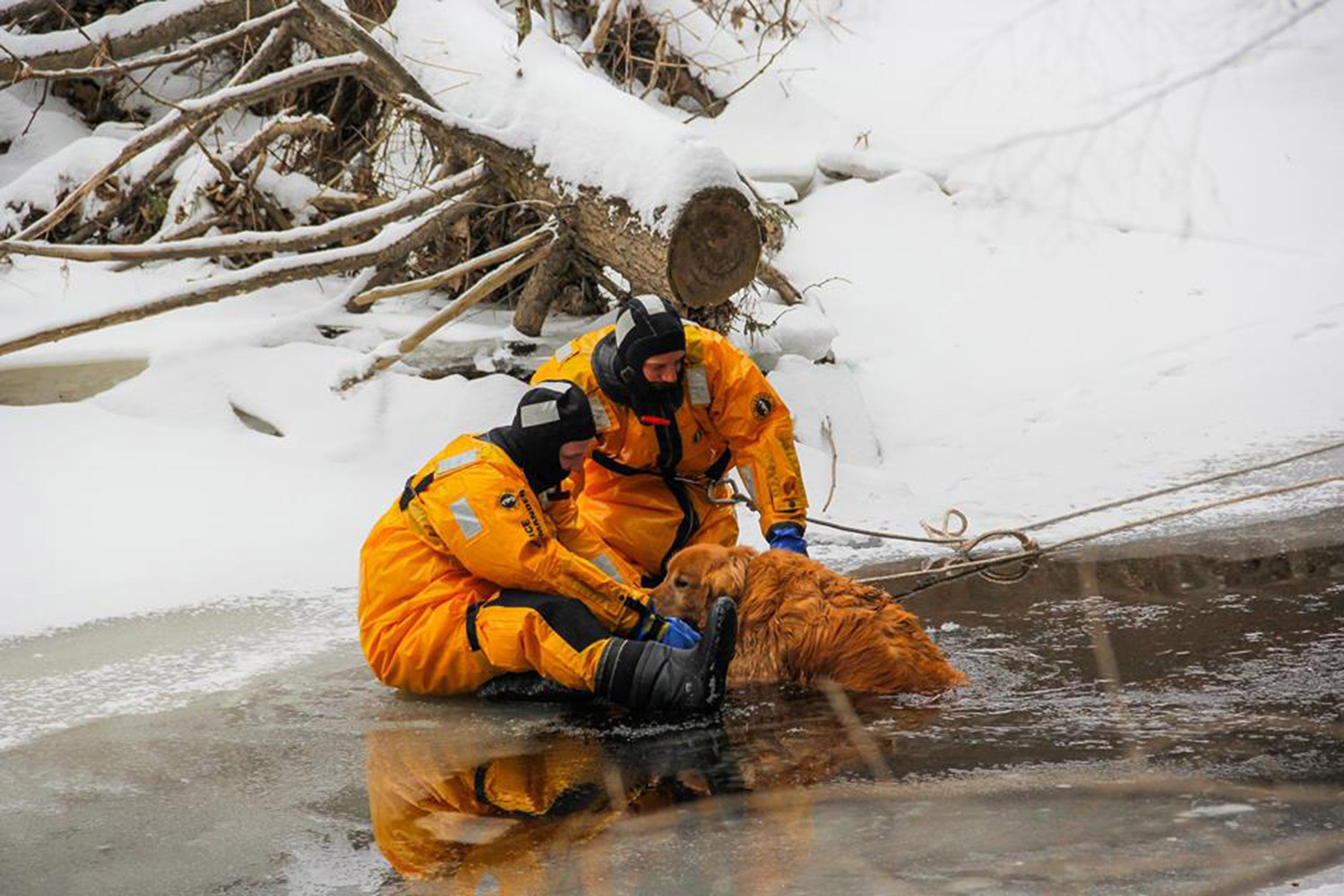 Firefighters Eric Bloom and Dana Curtis rescue Brewer the dog from the frigid Great Works River near Thurrell Road in South Berwick on Wednesday. The dog had been in the water for about an hour before being rescued, according to the department's Facebook page.