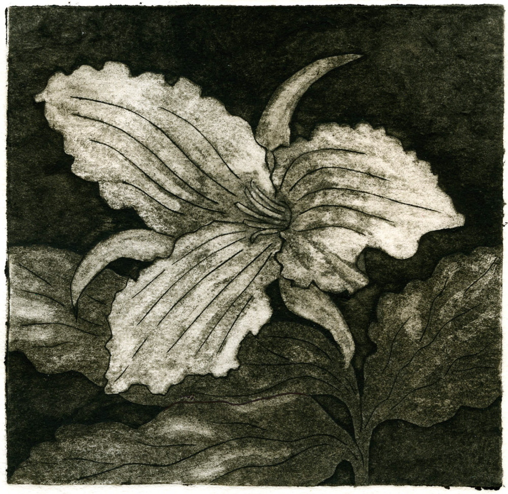 """Trillium,"" Andrea van Voorst van Beest"