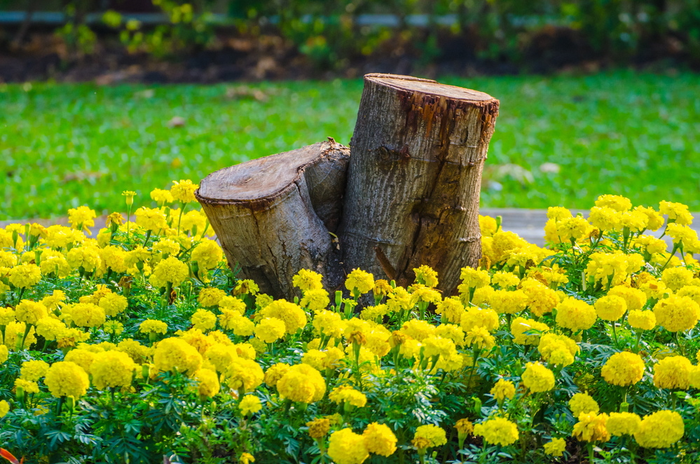 Leaving stumps and other dead wood in your yard will make nearby plants healthier.