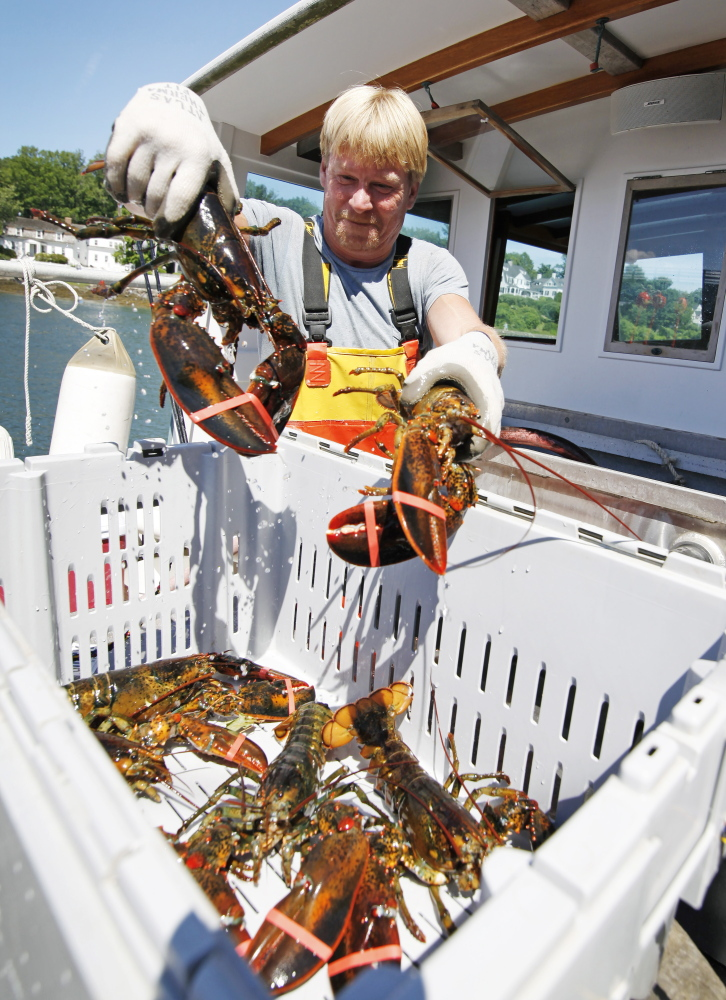 Ken Dotson unloads some of the larger hard-shell lobsters caught on board the Agamenticus last week. Lobster prices are relatively high right now; fishermen are getting paid about $4 per pound for soft-shell lobsters and $6 a pound for hard-shells.
