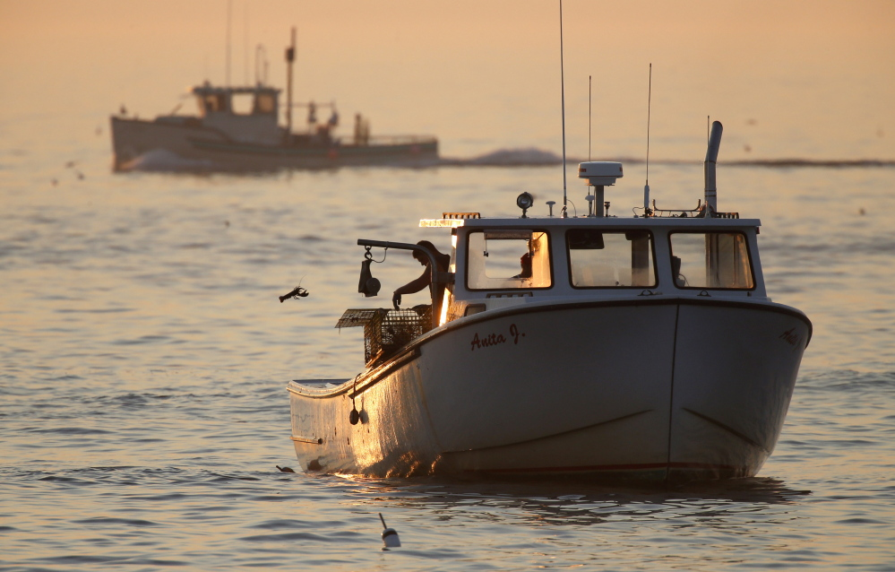 An undersized lobster is flipped back into the ocean by a lobsterman off Kennebunkport. The lobster population in the Gulf of Maine and Georges Bank, the rich fishing grounds off eastern Canada, has reached record highs. In southern New England, the catch has declined.