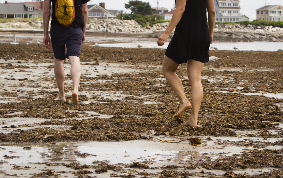 Beachgoers contend with seaweed July 8 in Biddeford Pool. Several towns are reviewing their beach cleaning policies to make sure they're adequate and environmentally sound.