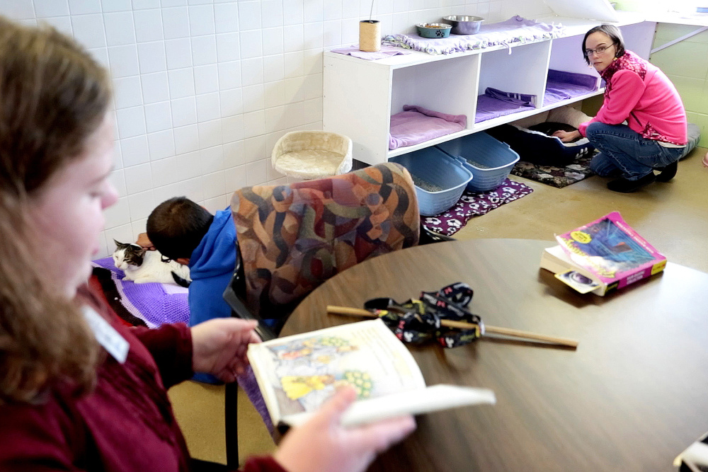 "As Fiona Shea reads her book ""D.W. Thinks Big"" out loud, Jacob Lessard, center, and Fiona Shea, top right, listen and pet cats in  the multi-cat room at the Animal Refuge League of Greater Portland."