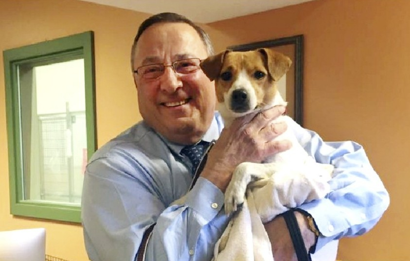 """Gov. Paul LePage  adopted a new """"first dog"""" from the Greater Androscoggin Human Society and named the Jack Russell terrier mix Veto."""