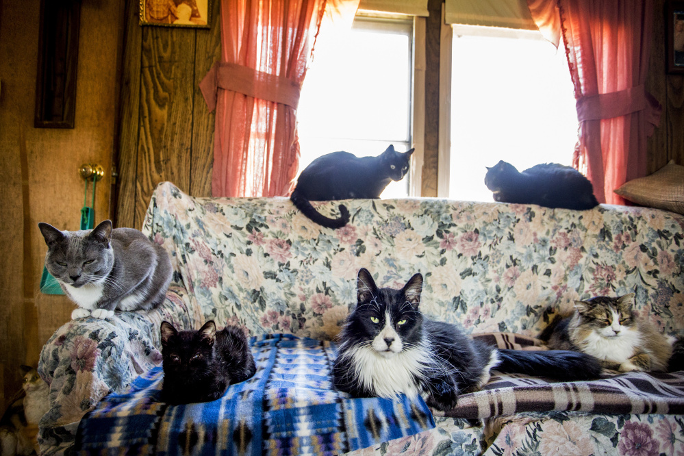 "About two dozen cats live in a Dixfield trailer home that's now a de facto shelter maintained by the Dixfield Cat Ladies. A former resident here left a modest fortune to provide the strays with ""shelter, food and health care,"" but the money's been tied up in litigation for years."