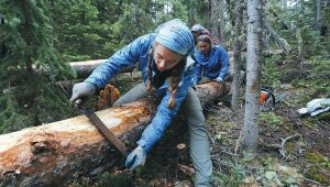 JESSA SOLIS, a crew member for the nonprofit organization Rocky Mountain Conservancy, and others strip bark from a naturally downed tree while working to repair a trail destroyed in a major flood a few years earlier inside Rocky Mountain National Park near Estes Park, Colorado. Rocky Mountain Conservancy works for the U.S. Park Service, running crews who do whatever work is needed.