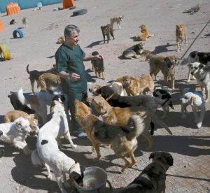 """VETERINARIAN HAMID GHAHREMANZADEH, chief of Aradkouh Stray Dogs Shelter plays with some of his charges on the outskirts of the capital Tehran, Iran. The shelter has been hired by the Tehran city government to take a new, more humane approach to deal with the burgeoning problem of stray dogs in the capital. It's a sign of changing attitudes among officials in a country where Islamic authorities long saw dogs as """"un-Islamic"""" and would at times confiscate them from people who kept them as pets."""