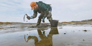 DAN HARRINGTON digs for bloodworms on a mudflat in Freeport. Maine is by far the biggest harvester of bloodworms and sandworms in the country, and the state's harvest has declined to a third of levels in the 1970s.