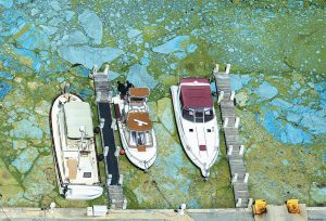 BOATS DOCKED at Central Marine in Stuart, Florida, are surrounded by blue green algae. The 153-mile-long Indian River Lagoon has been plagued by harmful algae blooms. Water quality testing data analyzed by the AP showed the average phosphorous level — a byproduct of fertilizers and human waste that algae thrive on — rose nearly 75 percent between 2000 and 2016.
